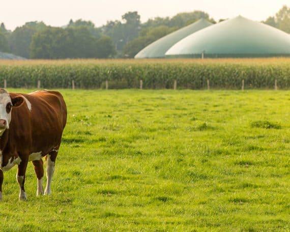 ASaP Bio Fuel Bio Gas Process Analysis Cow