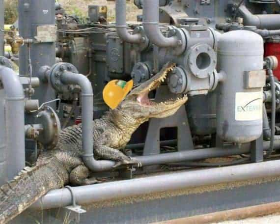 Cold Blooded Service Engineer